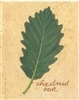 Chestnut Oak Framed Print (Light Background) by Bonnie Wolfe