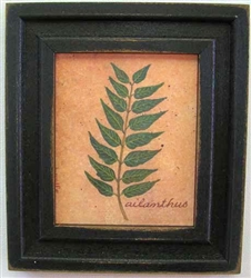 Ailanthus Leaf Framed Print by Bonnie Wolfe