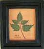 Box Elder Framed Print by Bonnie Wolfe
