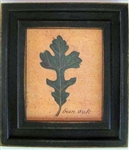 Burr Oak Framed Print by Bonnie Wolfe