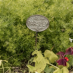 Parsley Herb Garden Stake by Ragon House