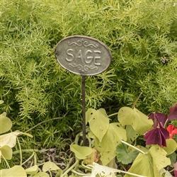 Sage Herb Garden Stake by Ragon House