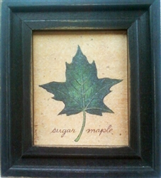 Sugar Maple Leaf Framed Print by Bonnie Wolfe